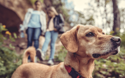 Fido's Adventure: What You Need to Know About Bringing Your Dog to a National Park
